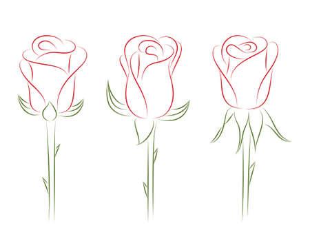 Set of roses.