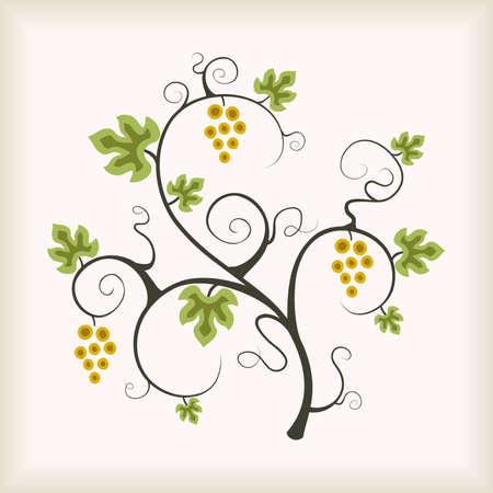 Beautiful grape vine tree. Vector illustration.