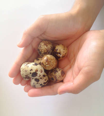 Small Quail eggs in hand