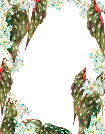 Photo pour Watercolor vintage floral tropical vertical frame, exotic flowers begonia maculata isolated on white background. Hand painted botanical design collection. - image libre de droit