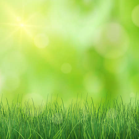 Illustration for Lush green grass lit by the sun - Vector illustration - Royalty Free Image