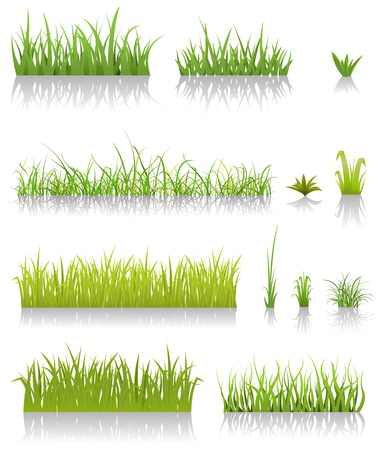Illustration of a set of various green blades of grassand other thin leaves for spring or summer time