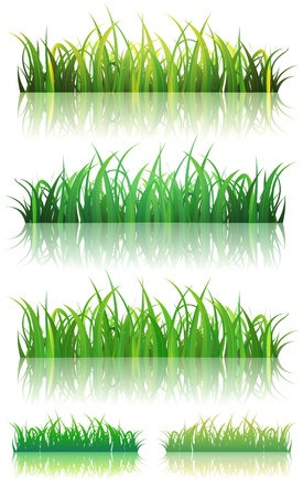 Illustration of a set of thin leaves and glossy green grass background with reflection on the ground, for summer or spring season