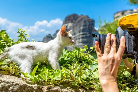 Photo for Close up of a camera while shot of a sweet, cute white kitten standing on the grass at Meteora Monasteries, Kalambaka, Central Greece. - Royalty Free Image