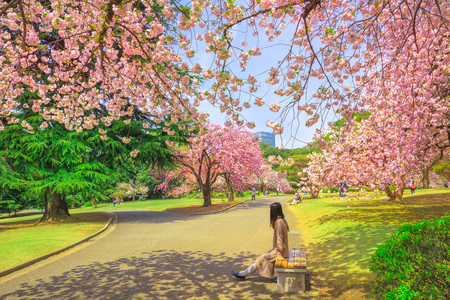 Foto de Unidentified woman relaxes under blossoming cherry tree in Shinjuku Gyoen National Garden. Shinjuku Gyoen is the best places in Tokyo to see cherry blossoms. Springtime, blu sky. - Imagen libre de derechos