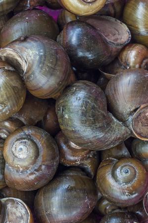 Tam Diep mountain snails in Vietnam
