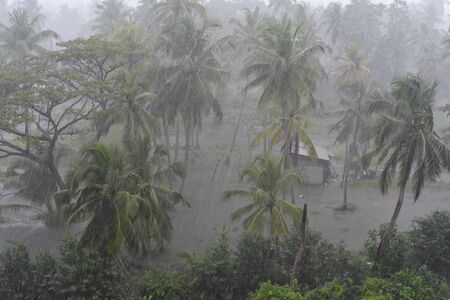Photo pour Rain and flooding on a small patch of land with coconut trees in Sri Lanka - image libre de droit