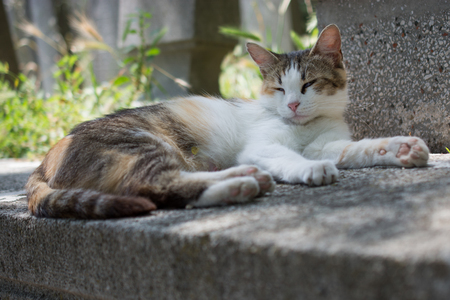 Photo for Domestic cat in view out in the street of the town - Royalty Free Image