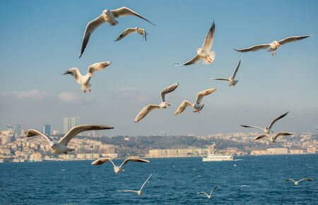 Photo for Seagull flying over the sea in Istanbul urban environment - Royalty Free Image