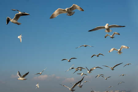 Photo for Seagull flying in sky. Seagull flying sky as freedom concept - Royalty Free Image