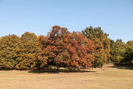 Trees in early autum