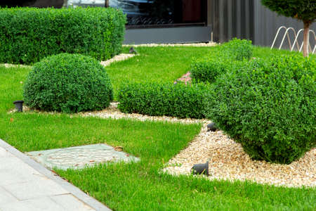 Photo pour Landscaping with mulching with pebbles and boxwood bushes in the foreground a manhole, detail closeup. - image libre de droit