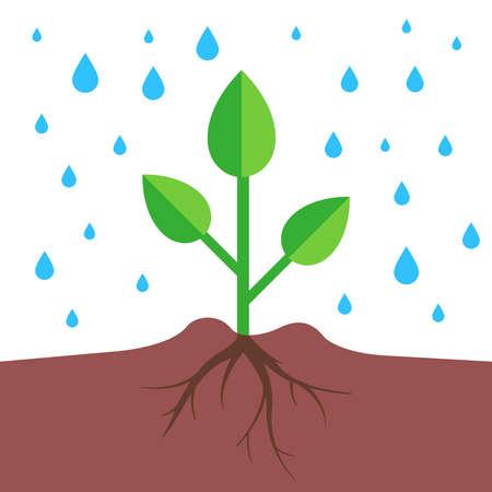 Illustration pour a plant with a root system pours rain. flat vector illustration. - image libre de droit