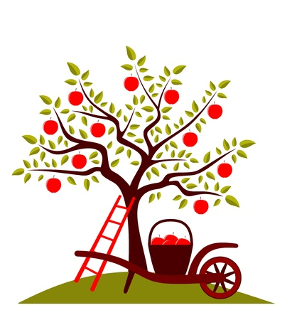 apple tree and hand barrow with basket of apples