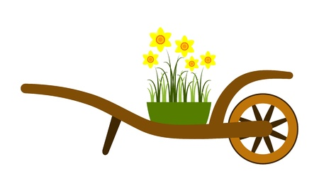 hand barrow and daffodils isolated on white background