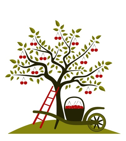 vector cherry tree and hand barrow with basket of cherries