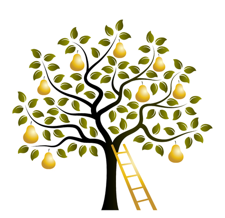 Illustration pour vector pear tree with golden pears and ladder isolated on white background - image libre de droit