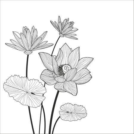 Illustration pour Beautiful lotus flower line illustration. Vector abstract black and white floral background with place for text. - image libre de droit