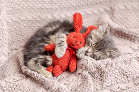 Photo pour Kitten sleep on cozy blanket hug toy easter bunny. Fluffy tabby kitten snoozing comfortably with plush rabbit hare on knitted pink bed. Cat sweet dreams. - image libre de droit