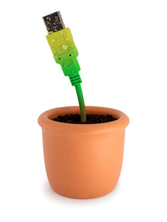 Potted plant with ripely green-yellow usb cable. Isolated on white.