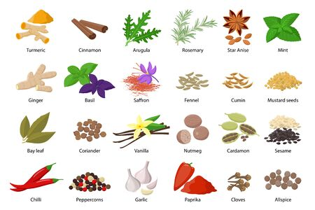 Illustration pour Large set of spices vector illustrations in flat design isolated on white background. Spices and herbs icons collection - image libre de droit