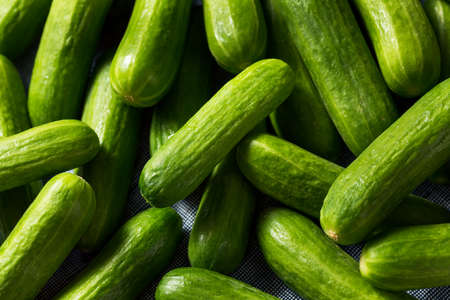 Foto de Raw Green Organic Mini Cocktail Cucumbers in a Bunch - Imagen libre de derechos