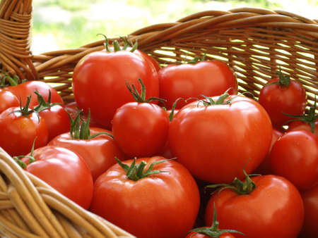 Wicker basket of tomatoes on green grass