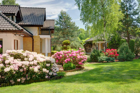 Beauty spring-flowering shrubs in designed garden