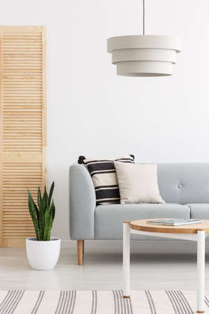 Lamp above grey settee with pillows in white flat interior with plant and wooden table. Real photo