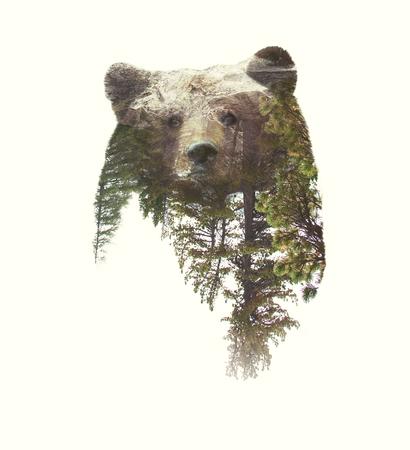 Photo pour Double Exposure Portrait of Bear and Green Forest. - image libre de droit