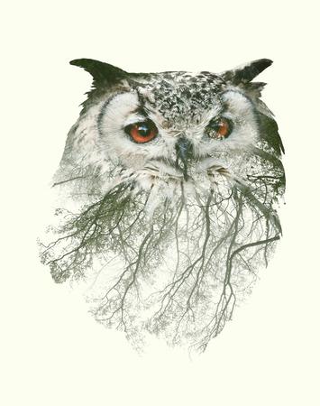 Photo pour Double Exposure Portrait of Owl and Tree Branch - image libre de droit