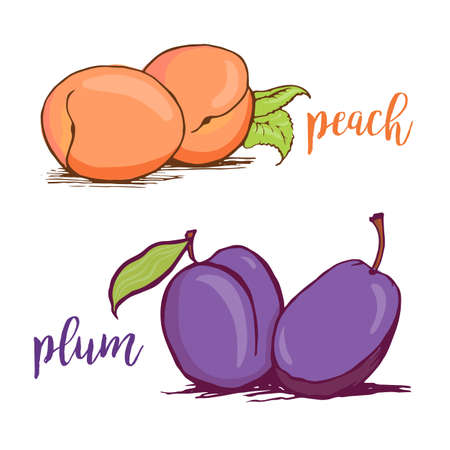 Illustration pour Peach and plum sketch style vector illustration isolated on white background. Hand drawn couples of fresh ripe peaches and plums - image libre de droit
