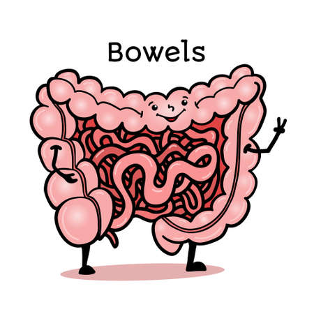 Illustration pour Cute and funny human guts, bowels, intestines character, cartoon vector illustration isolated on white background. Healthy smiling guts, bowels, intestines character with arms and legs - image libre de droit