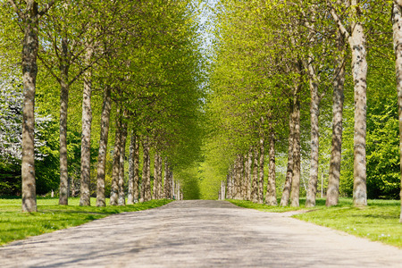 An alley of green trees during spring time.