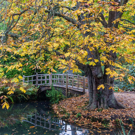 A view of a Japanese style bridge, framed by a horse chestnut tree