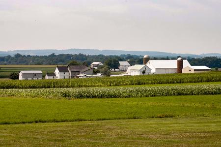 Amish Farm on Sunny Cloudless Summer Day, with Barn, Silos, and Farm House 4