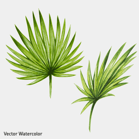 Watercolor tropical palm leaves. Vector illustration.のイラスト素材