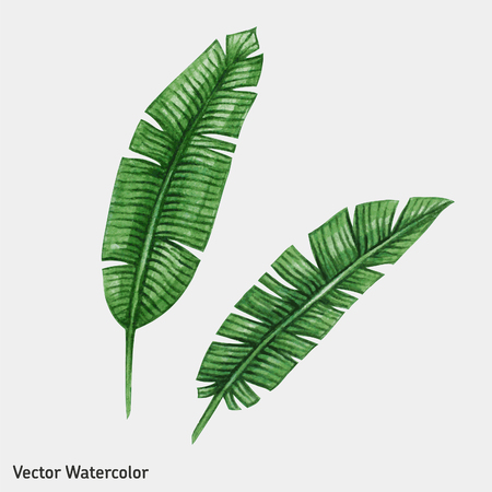 Watercolor Tropical Palm Leaves Vector Illustration Royalty Free Vector Graphics To get more templates about posters,flyers,brochures,card,mockup,logo,video,sound,ppt,word,please visit pikbest.com. watercolor tropical palm leaves vector