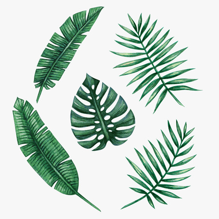 Illustration for Watercolor tropical palm leaves. Vector illustration. - Royalty Free Image