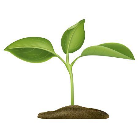 Illustration pour Realistic Detailed 3d Green Plant Seedling Growing in Soil Closeup View. Vector illustration of Gardening Concept - image libre de droit