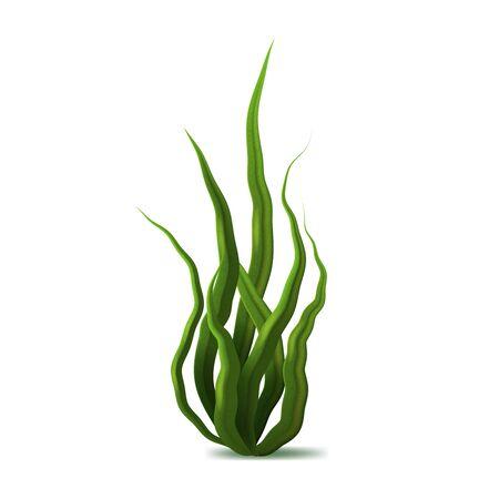 Illustration pour Realistic Detailed 3d Green Spirulina Seaweed. Vector - image libre de droit