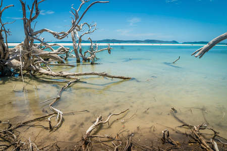 Dead tree in the sea, with turquoise sea water