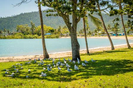 Seagulls enjoying the shades of a tree in Australia
