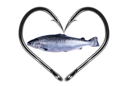 Photo pour Fishing hook love heart sign with salmon fish isolated on a white background. Fishing hook close up. Fishing tackle. Stainless steel fishing hooks. Fish hooks in heart shape. Concept love fishing. - image libre de droit