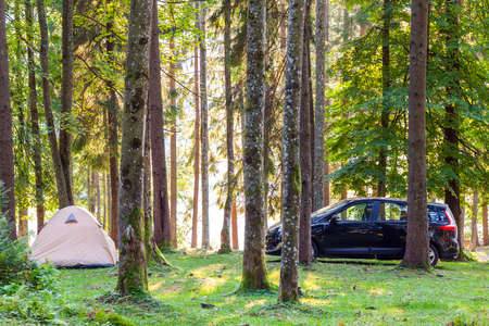 Camping tent and a car in green forest in spring sunny morning with fog haze among trees. Recreation concept.