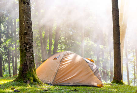 Camping tent in green forest in spring sunny morning with fog haze among trees. Recreation concept. Soft light effect