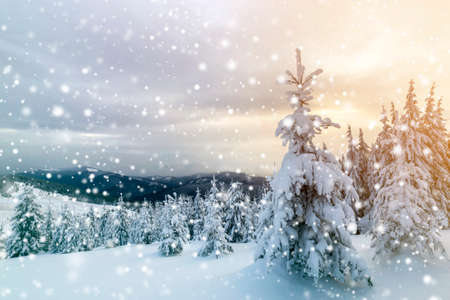 Foto de Winter blue landscape. Spruce tree in deep snow on mountain clearing on cold sunny day on copy space background of cloudy sky. - Imagen libre de derechos