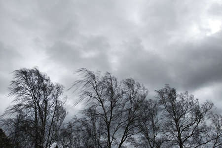 Photo for Black trees with bare branches without leaves bent under strong wind in bad cold weather. - Royalty Free Image