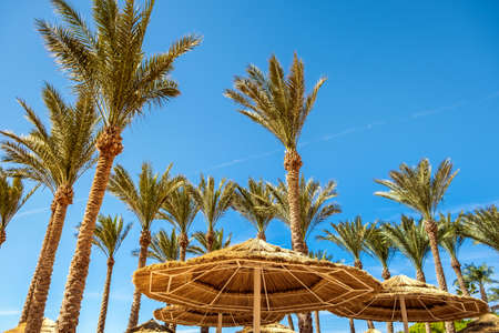 Photo pour Straw shade umbrellas and fresh green palm trees in tropical region against blue vibrant sky in summer. - image libre de droit