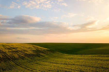 Photo pour Aerial view of bright green agricultural farm field with growing rapeseed plants at sunset. - image libre de droit